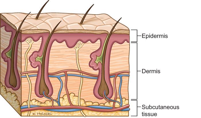 layers-of-skin